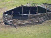 Aigles sur un abri à bétail
