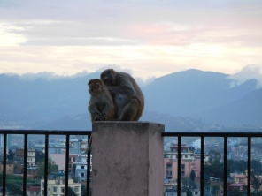 Les singes du Monkey Temple
