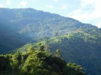 Découverte de la végétation tropicale