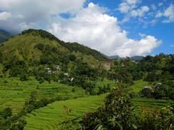 Vue des rizières en terrasse