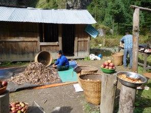 Achat de pomme séchées - fabrication artisanale