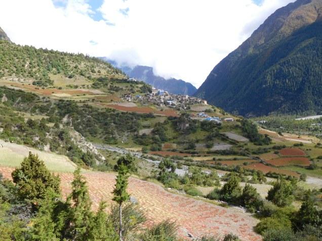 Upper Pisang et ses champs de sarrasin rougeoyants