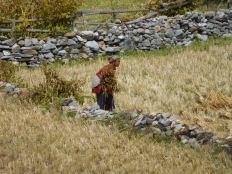 Femme travaillant aux champs