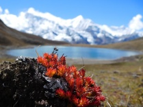 Fleurs d'altitude
