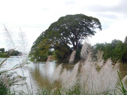 Les bords du Mékong
