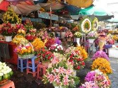 Stands de fleurs