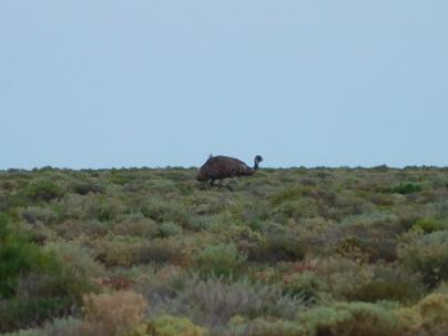 Emu, nous avons été très émus...