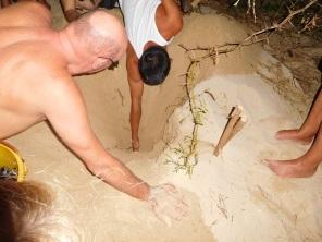 Trou creusé pour aider la sortie des bébé tortues