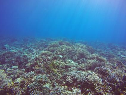 Rayons de soleil sur jardin de corail