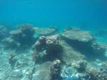 Jardin de coraux