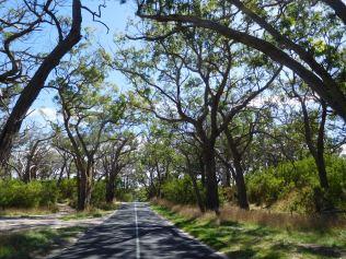 La route vers Cape Otway