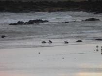 D'autres pingouins se montrent