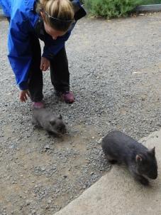 Charlotte avec des bébés wombat