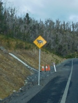 Diable de Tasmanie mais énervé
