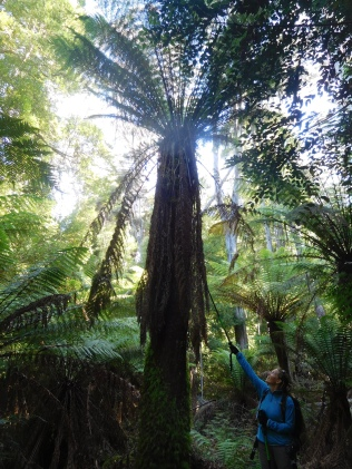 La forêt enchantée et ses fougères géantes