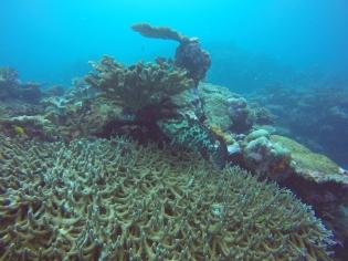 Superbe loche sur corail plateau