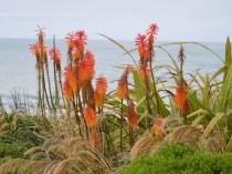 Fleurs en forme de goupillon