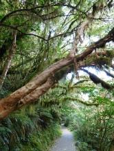 Forêt aux nombreuses mousses
