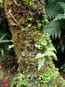 Microcosme d'un tronc de fougère arborescente)
