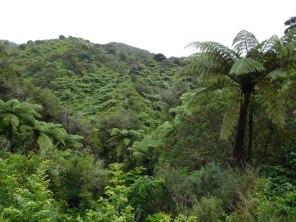 Vue sur les fougères arborescentes ou palmorescentes