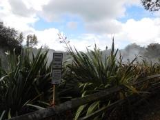 Sources chaudes dans la vallée de Waikite