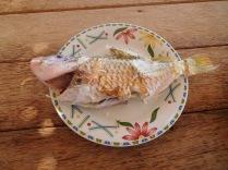 Poisson frais pêché par Papy
