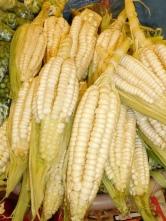 Le fameux choclo (maïs géant)