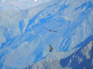 Terrain de jeu des condors