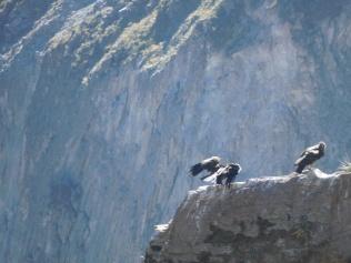 Petite pause des condors