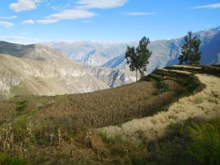 Champs de céréales en haut du canyon