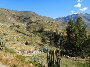 Les terrasses incas